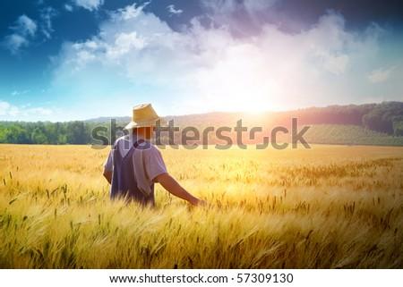 Farmer walking through a golden wheat field - stock photo