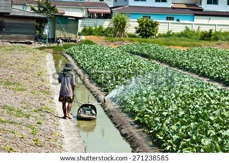 farmer watering in Field of fresh collard - stock photo