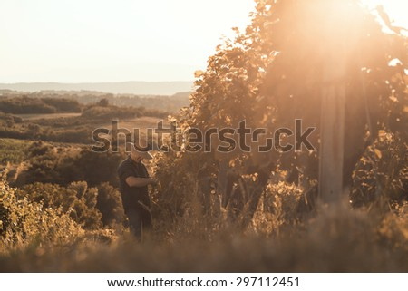 Farmer with hat working and posing in his vineyard - stock photo