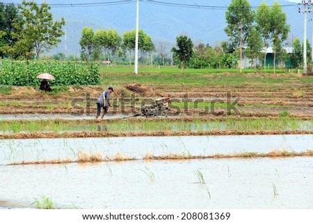 farmer with rice farm Tractor - stock photo