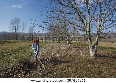 Farmer woman gathering fallen leaves with a rake, spring cleaning in the orchard
