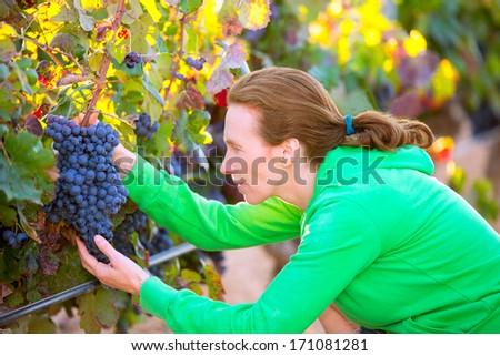 Farmer woman in vineyard harvest autumn leaves in mediterranean field - stock photo