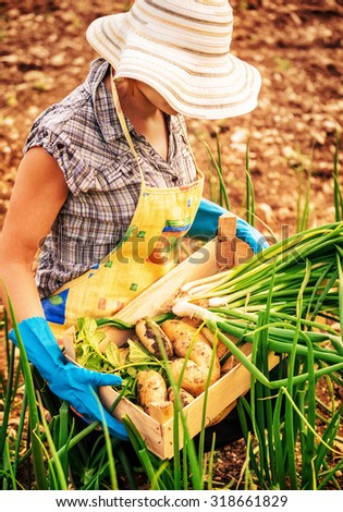 Farmer woman working in the garden, holding in hands wooden box with fresh green ripe onion potato, enjoying good harvest - stock photo