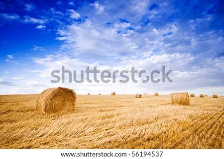 Farmers field full of hay bales - stock photo