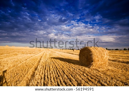 Farmers field full of hay bales - stock photo