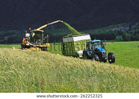 Farmers harvest a crop of triticale for silage on a West Coast dairy farm, South Island, New Zealand