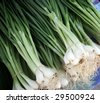 Farmers market: Green onion - stock photo