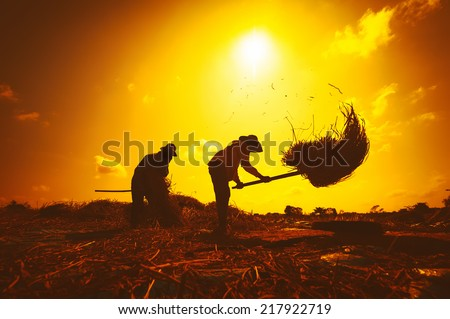 Farmers silhouettes at sunset. Rice grain threshing during harvest time in northern Thailand - stock photo