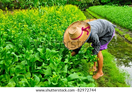 Agricultural Crops Images Agricultural Crops to