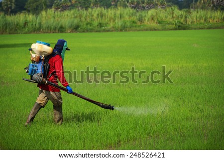 Farmers were spraying herbicides in rice field. - stock photo
