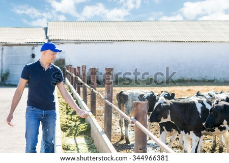 farmers with feed for cows in the hand on livestock ranches - stock photo