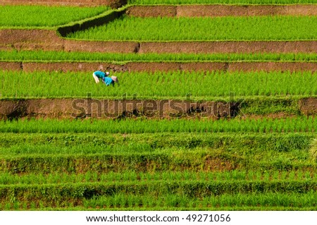 farmers working on the field - stock photo