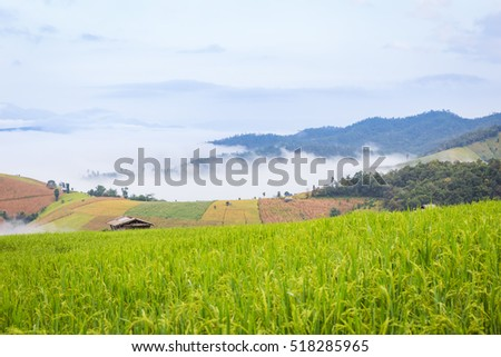 farmhouse in rice field morning scenery with fog at Chiang Mai, Thailand, Pa Pong Piang