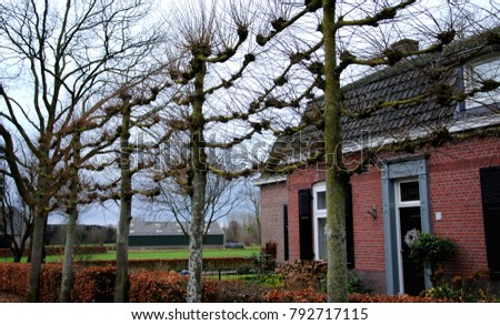 Farmhouse in rural Noord Brabant, the Netherlands, with a row of horizontally pruned linden trees (Tilia europaea) in front, traditionally used as a sun screen