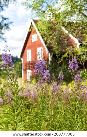 Farmhouse in Sweden with blooming fireweed in the forground - stock photo