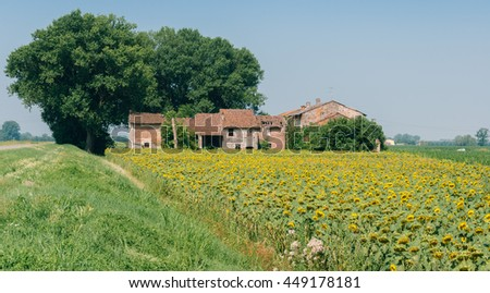 Farmhouse with giant sunflowers in Lombardy, Italy (selective focus)