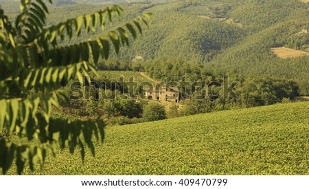 farmhouse with vineyard in Tuscany