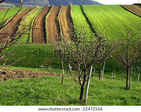 Farming Field Cultivated Land Field