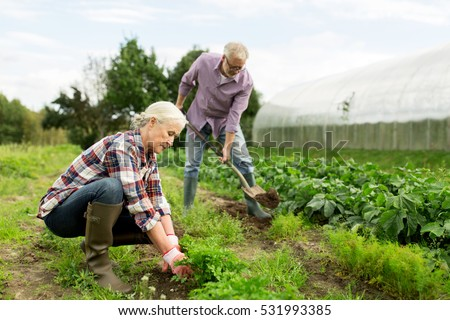 farming gardening agriculture and people concept happy senior couple working in garden at