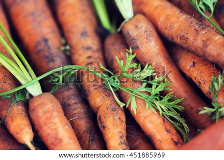 farming, harvest, food, vegetables and agriculture concept - close up of carrot - stock photo