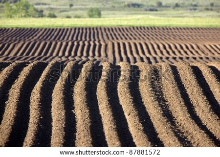 Farming Rows seeds plalnted Canada irrigation sprinklers - stock photo