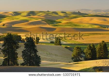 Farmland at Harvest Time - stock photo