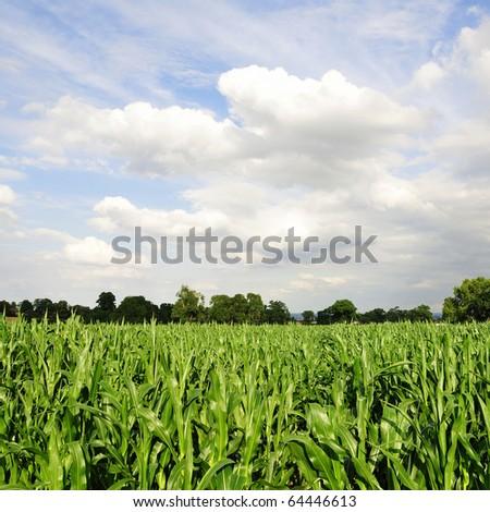 Farmland Crops - stock photo