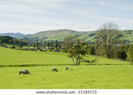 Farmland in Lake District National Park England