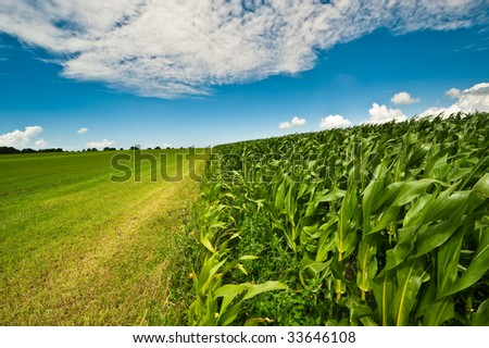 Farmland in summer with fresh green grass, corn field and bright blue sky - stock photo