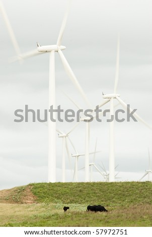 farmland on a hot cloudy day with cattle in the foreground and wind turbines in the background near Lake Benton Minnesota. - stock photo