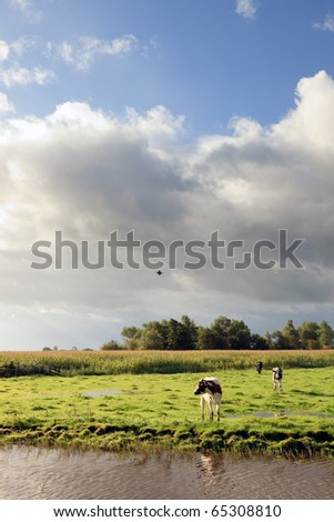 Farmland with canal and cows under cloudy sky, the Netherlands