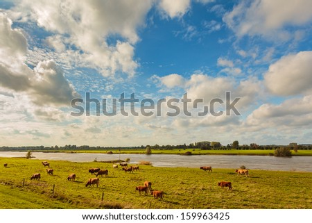 Farmland with cows alongside the Dutch river IJssel in the province of Gelderland - stock photo