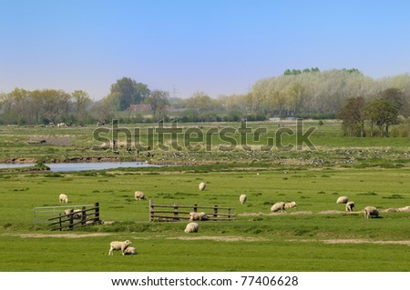 Farmland with sheep, cows and birds