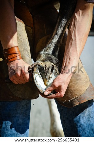 farrier clearing hoofs  - stock photo