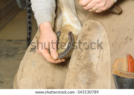 Farrier performing equine maintenance by putting on horse shoes to care for the horse