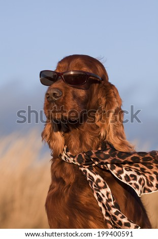 Fashion dog - funny dog with sunglasses and scarf - stock photo