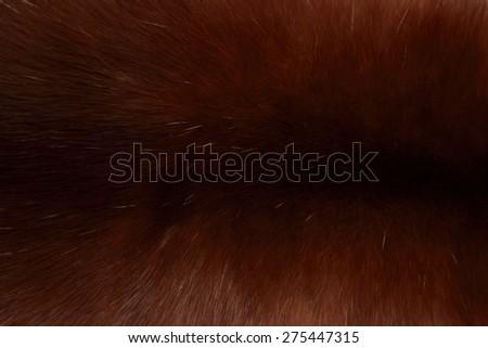 Fashion texture background of furry polar fox/Fur fashion of polar fox luxury background - stock photo