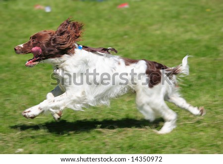 fast dog with motion blur - stock photo