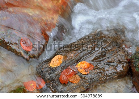 fast mountain stream strewn with autumn leaves