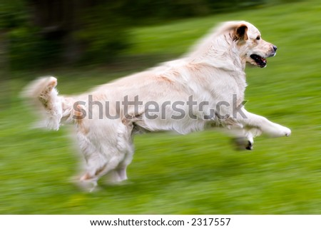 Fast running dog, on natural green background, motion blurred - stock photo