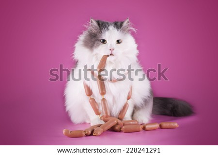 fat cat is eating a sausage on a pink background - stock photo