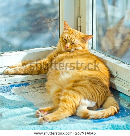 Fat ginger cat sleeping on a sunny day time on a balcony, fat happy cat, happy cat, domestic cat - stock photo