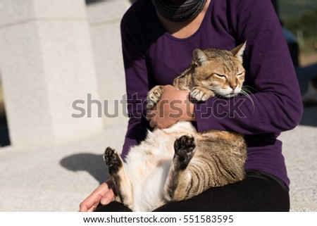 fat tabby holded by a woman in outdoor
