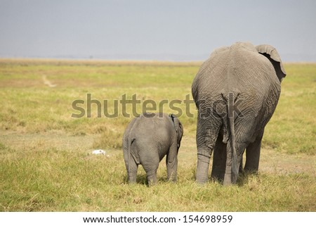 Father and Baby Elephants - stock photo