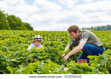 Father and little kid boy, his son having fun on strawberry farm in summer. Happy Family of two eating healthy organic food, fresh berries. - stock photo