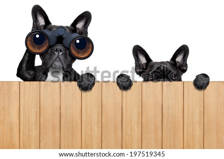 father and son dogs spying behind wood fence - stock photo