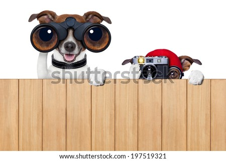 father and son dogs spying behind wood fence with camera and binoculars - stock photo