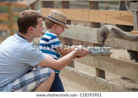 Father and son feeding birds at a farm - stock photo