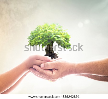 Father and son hands holding big green plant in soil on blur beautiful sea, ocean, forest, desert over colorful sunset background. Ecology Environment CSR Spring Time Go Green ROI Trust Kidney concept - stock photo