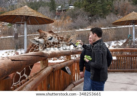 Father and son visit the Cheyenne Mountain Zoo in Colorado Springs and feed the giraffe lettuce, a popular attraction. - stock photo